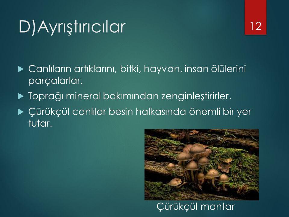 D)Ayrıştırıcılar Canlıların artıklarını, bitki, hayvan, insan ölülerini parçalarlar. Toprağı mineral bakımından zenginleştirirler.