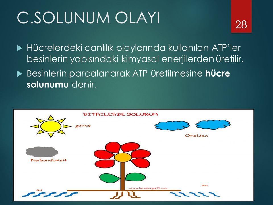 C.SOLUNUM OLAYI Hücrelerdeki canlılık olaylarında kullanılan ATP'ler besinlerin yapısındaki kimyasal enerjilerden üretilir.