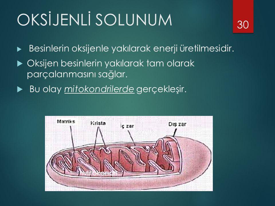 OKSİJENLİ SOLUNUM Besinlerin oksijenle yakılarak enerji üretilmesidir. Oksijen besinlerin yakılarak tam olarak parçalanmasını sağlar.