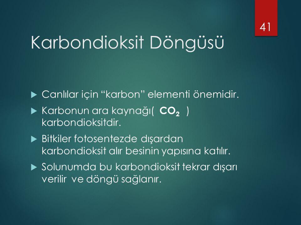 Karbondioksit Döngüsü