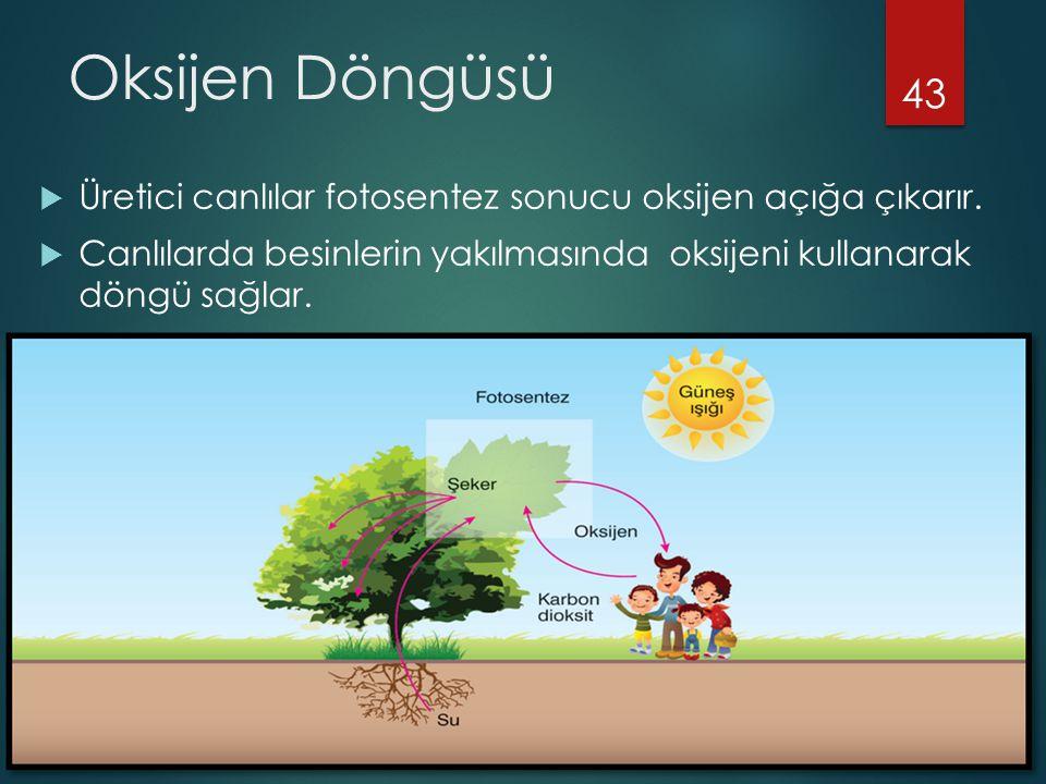 Oksijen Döngüsü Üretici canlılar fotosentez sonucu oksijen açığa çıkarır.