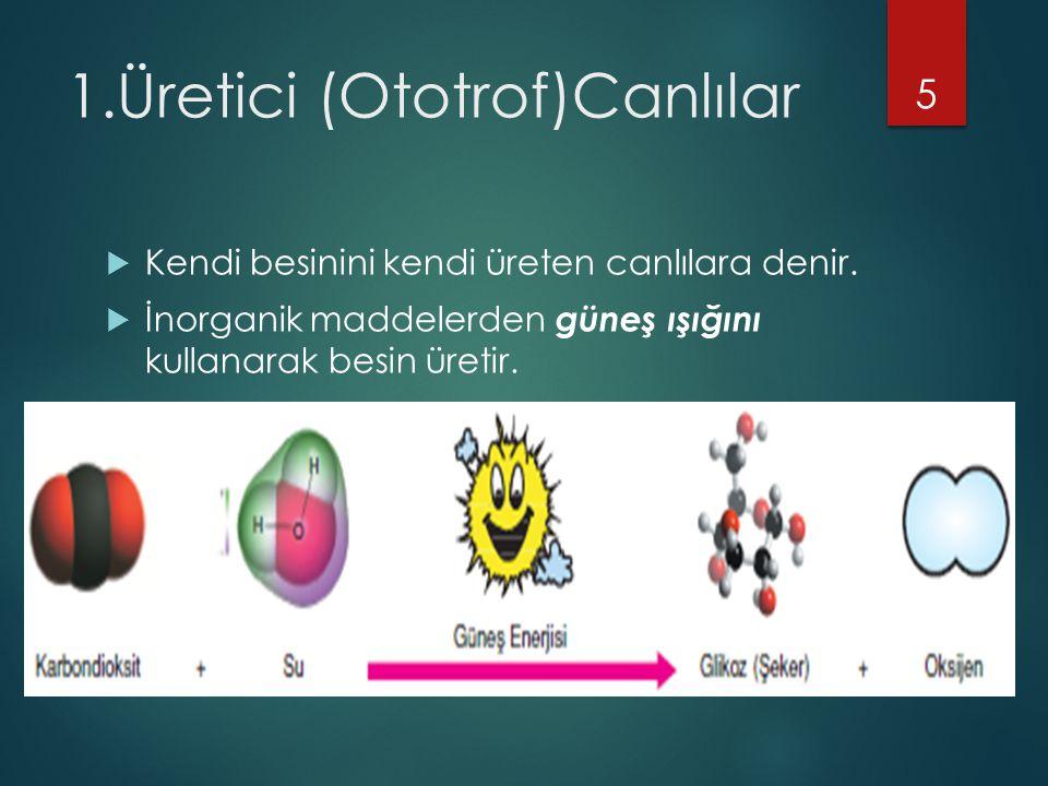 1.Üretici (Ototrof)Canlılar