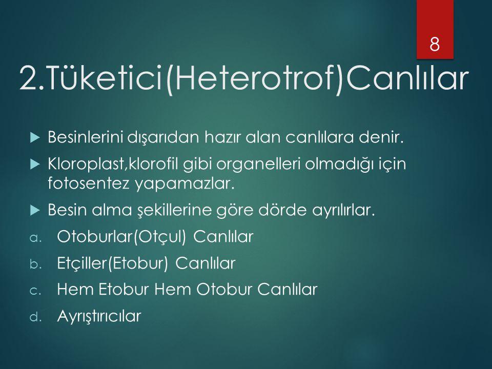 2.Tüketici(Heterotrof)Canlılar