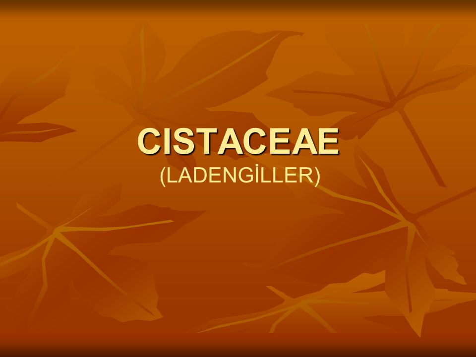 CISTACEAE (LADENGİLLER)