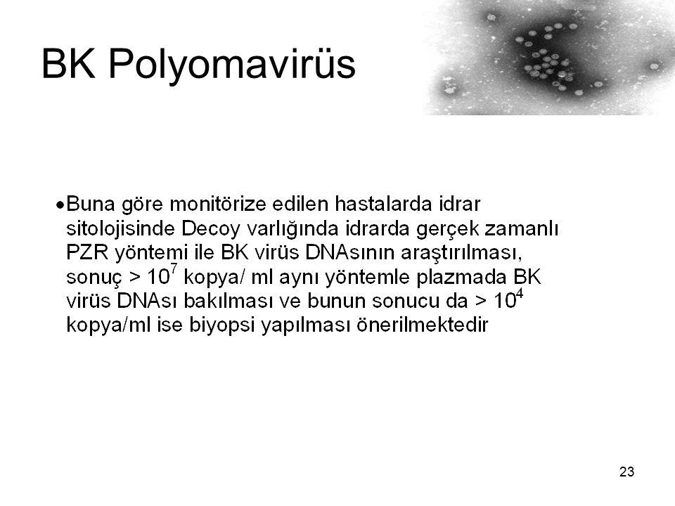 BK Polyomavirüs