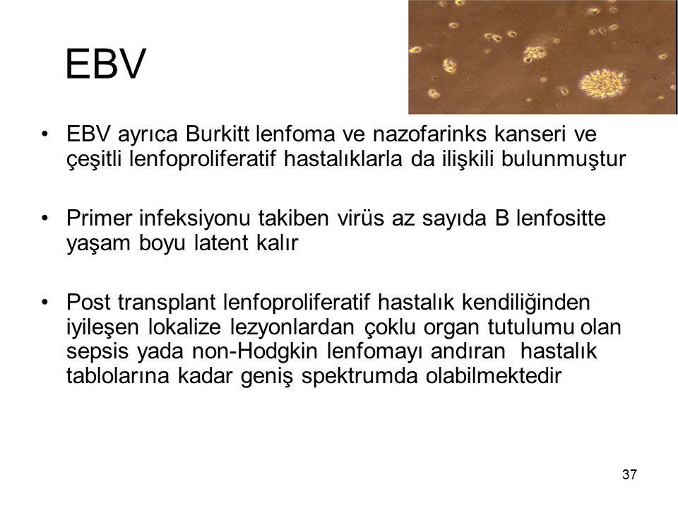 EBV EBV ayrıca Burkitt lenfoma ve nazofarinks kanseri ve çeşitli lenfoproliferatif hastalıklarla da ilişkili bulunmuştur.
