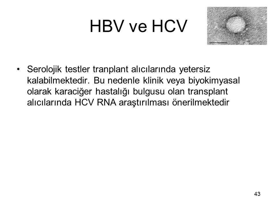 HBV ve HCV