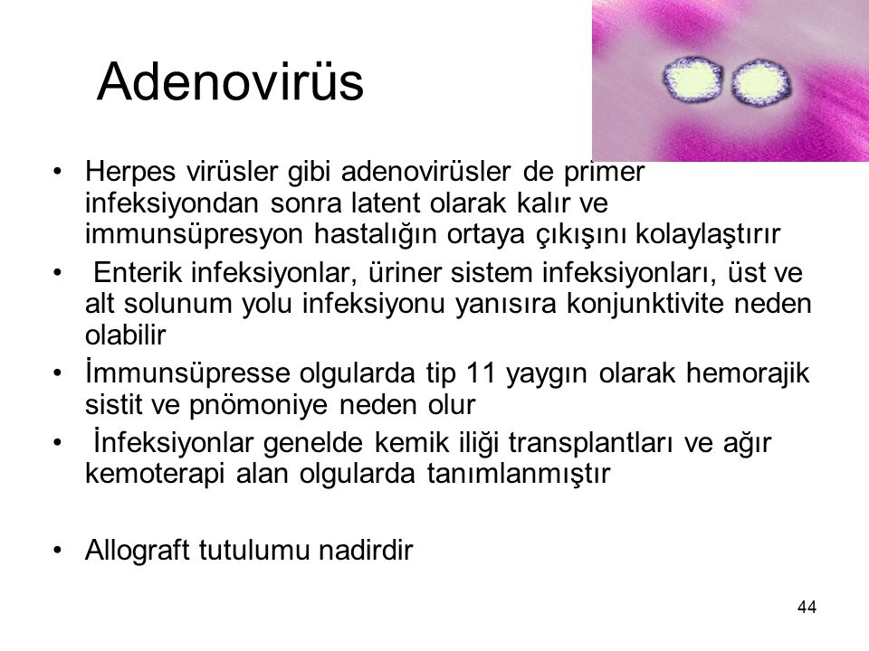 Adenovirüs