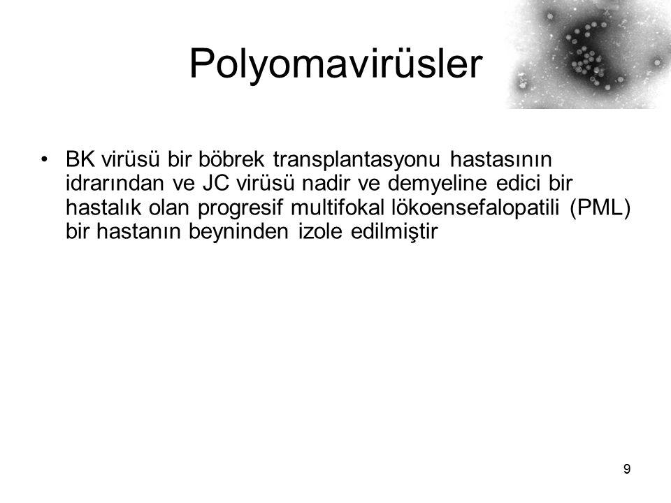 Polyomavirüsler