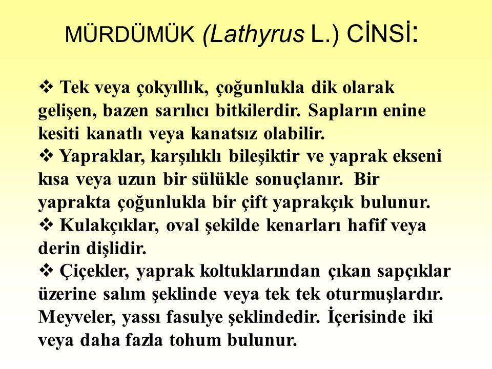 MÜRDÜMÜK (Lathyrus L.) CİNSİ: