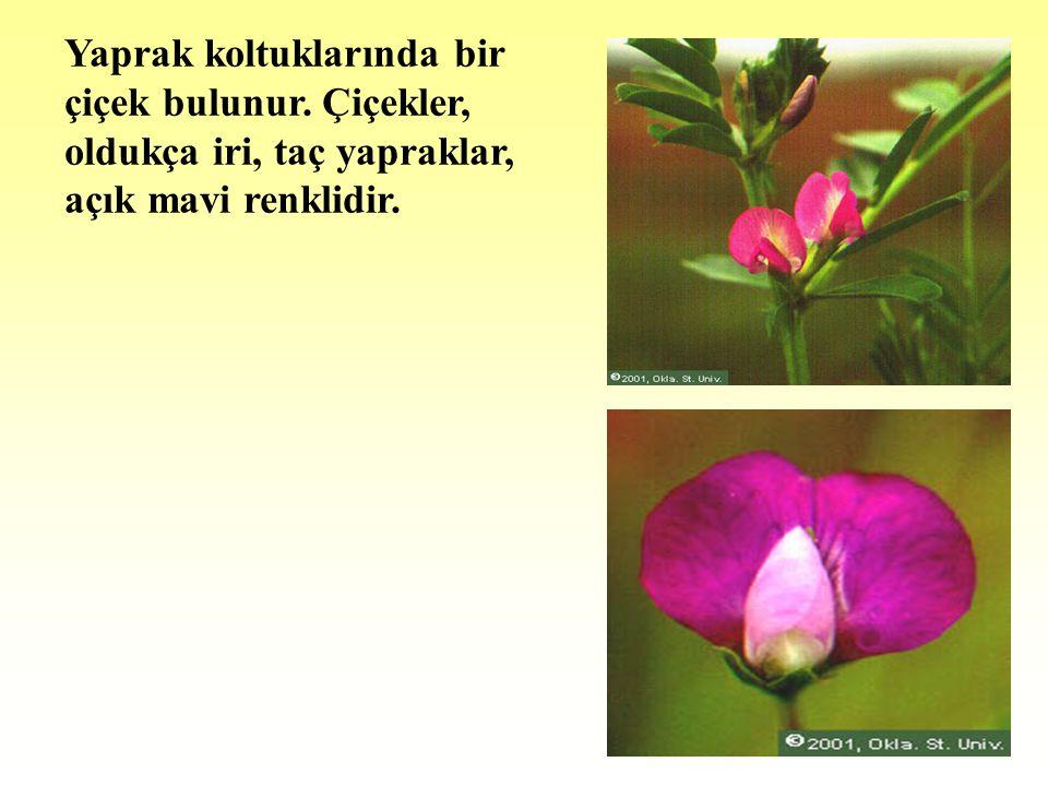 Yaprak koltuklarında bir çiçek bulunur