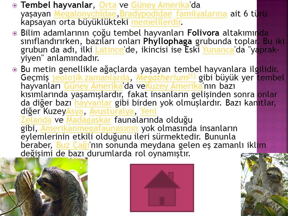 Tembel hayvanlar, Orta ve Güney Amerika da yaşayan Megalonychidae,Bradypodidae familyalarına ait 6 türü kapsayan orta büyüklükteki memelilerdir.