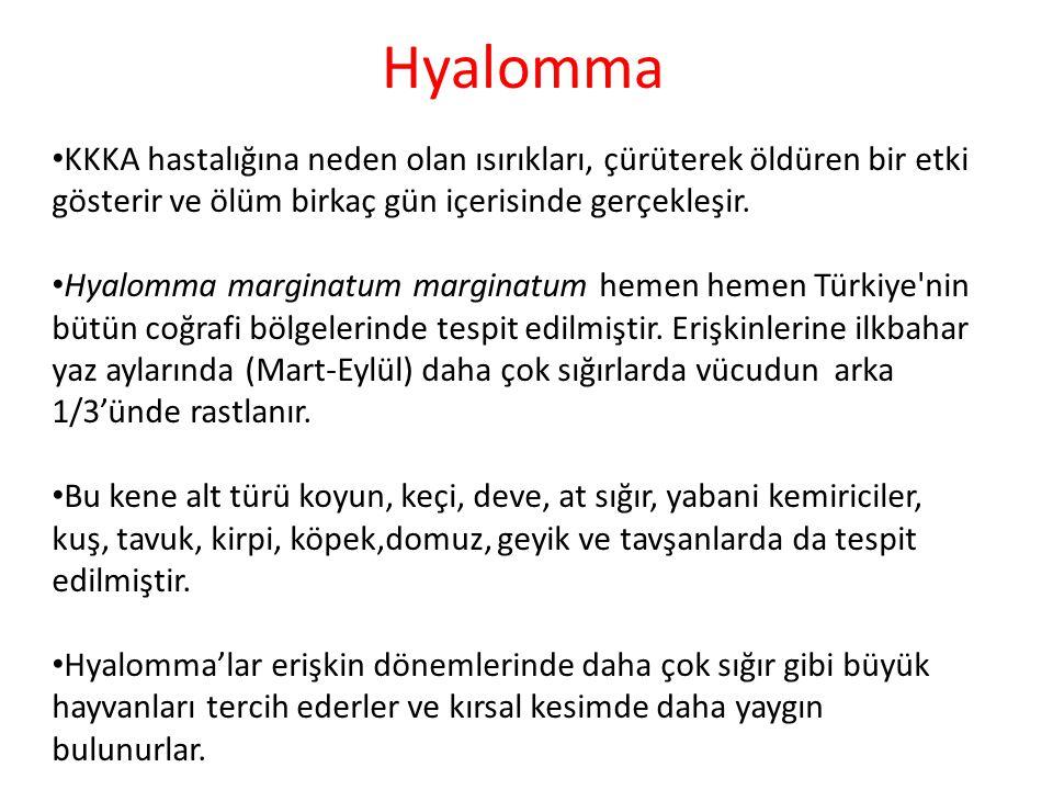 Hyalomma KKKA hastalığına neden olan ısırıkları, çürüterek öldüren bir etki gösterir ve ölüm birkaç gün içerisinde gerçekleşir.