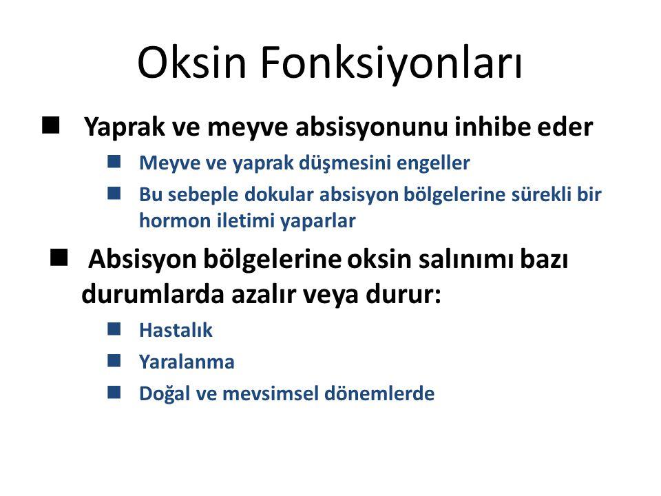 Oksin Fonksiyonları Yaprak ve meyve absisyonunu inhibe eder