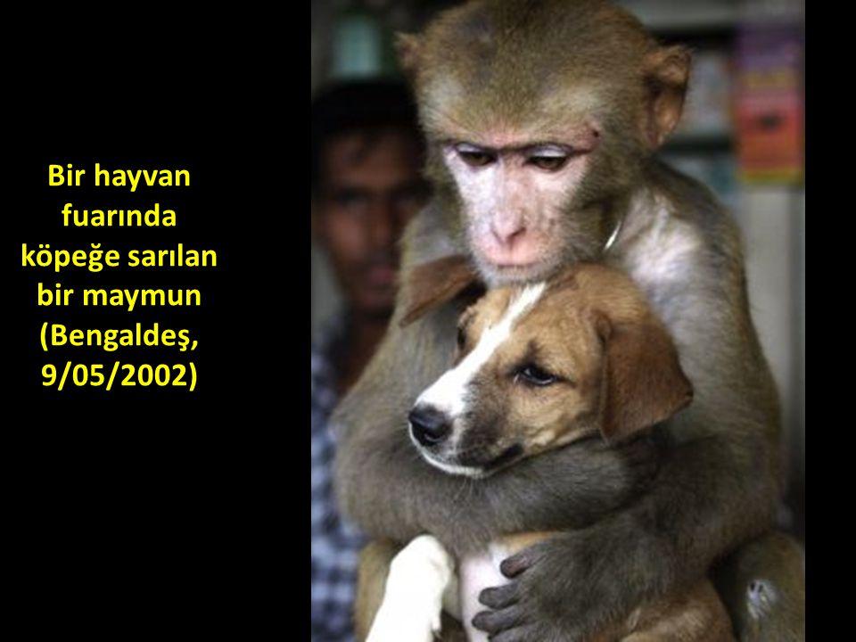 Bir hayvan fuarında köpeğe sarılan bir maymun (Bengaldeş, 9/05/2002)