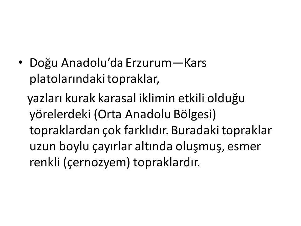 Doğu Anadolu'da Erzurum—Kars platolarındaki topraklar,