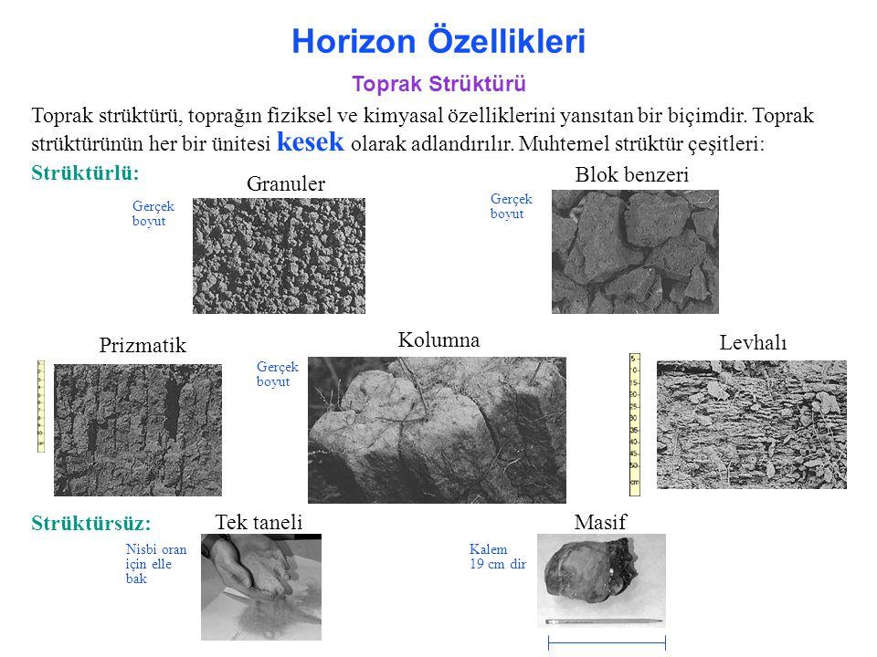 Horizon Özellikleri Toprak Strüktürü