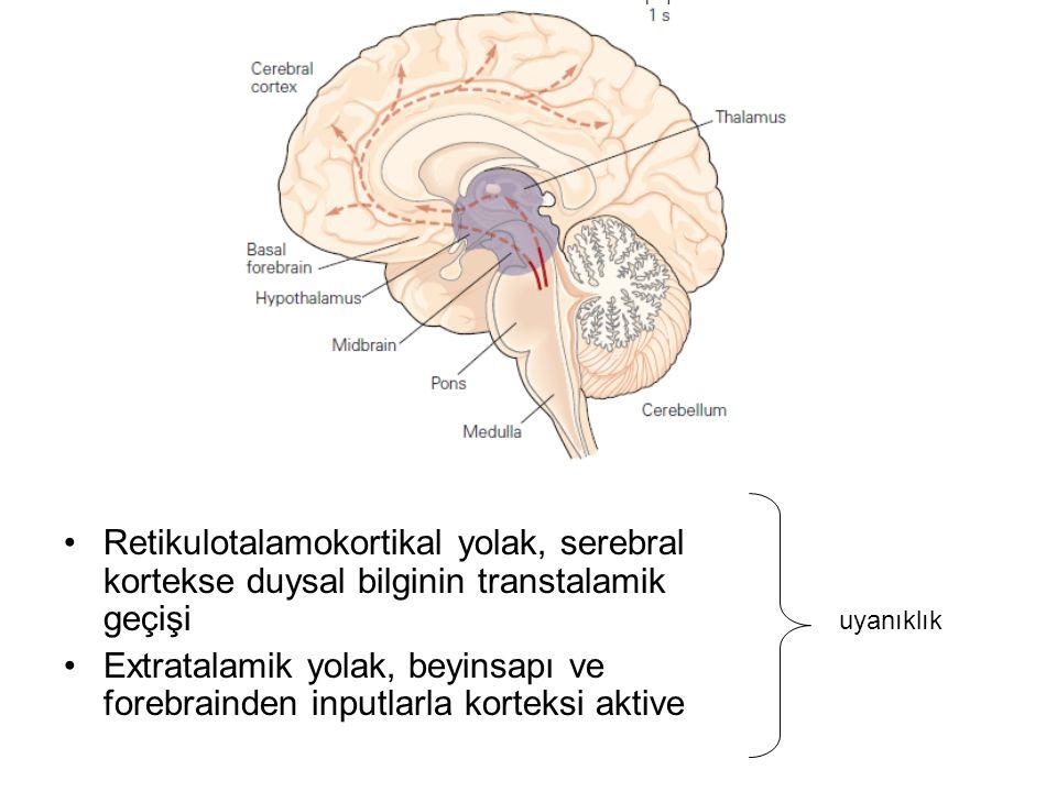 Retikulotalamokortikal yolak, serebral kortekse duysal bilginin transtalamik geçişi