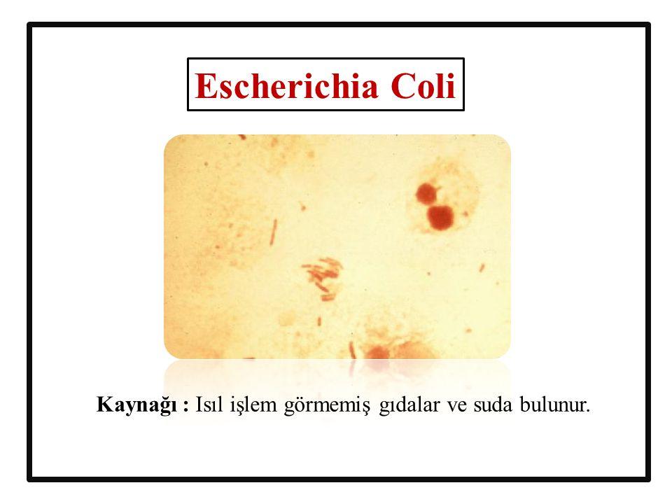 Escherichia Coli Kaynağı : Isıl işlem görmemiş gıdalar ve suda bulunur.