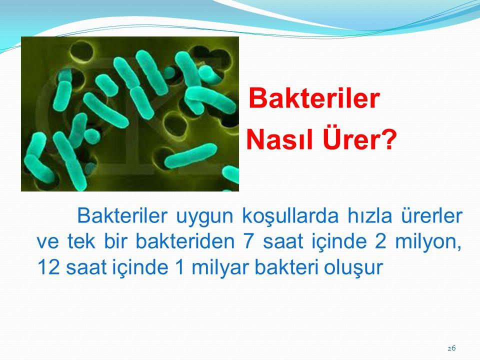 Bakteriler Nasıl Ürer