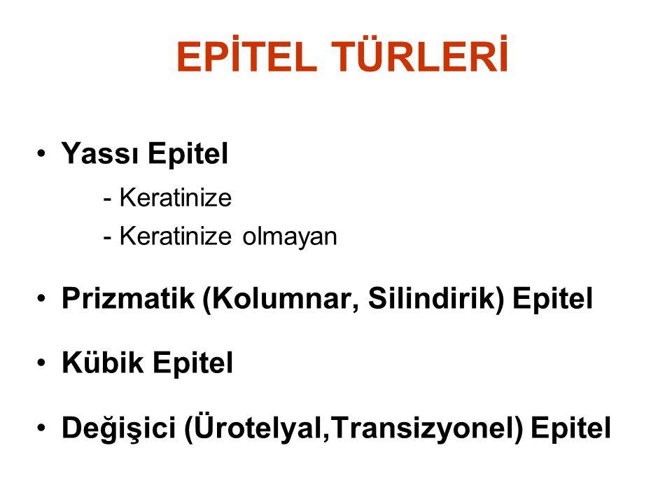 EPİTEL TÜRLERİ Yassı Epitel - Keratinize