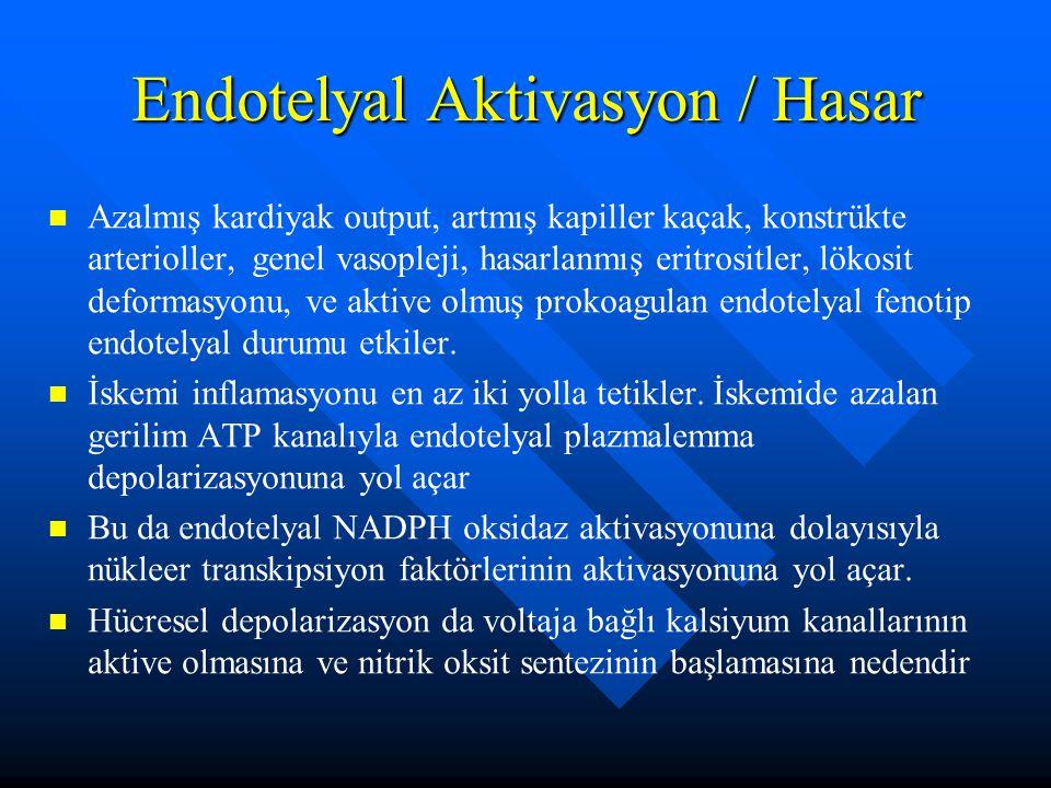 Endotelyal Aktivasyon / Hasar
