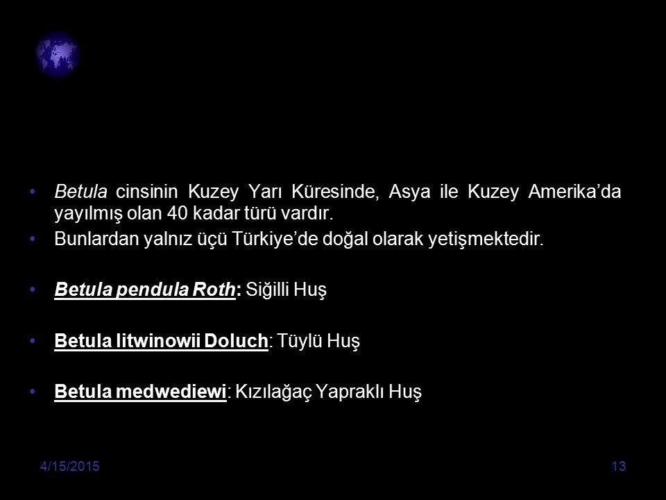 Bunlardan yalnız üçü Türkiye'de doğal olarak yetişmektedir.