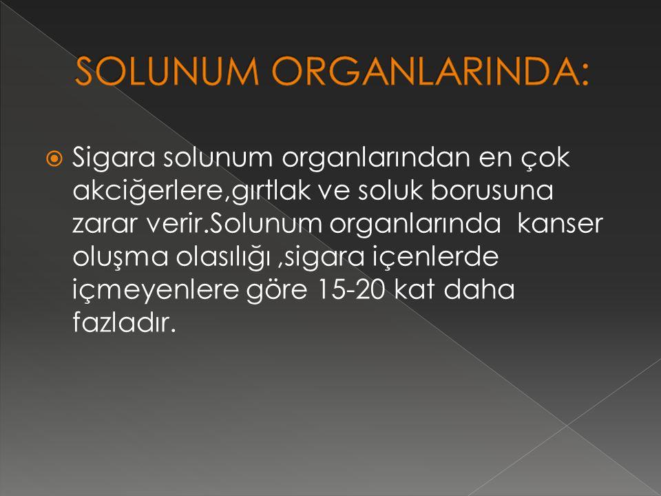 SOLUNUM ORGANLARINDA: