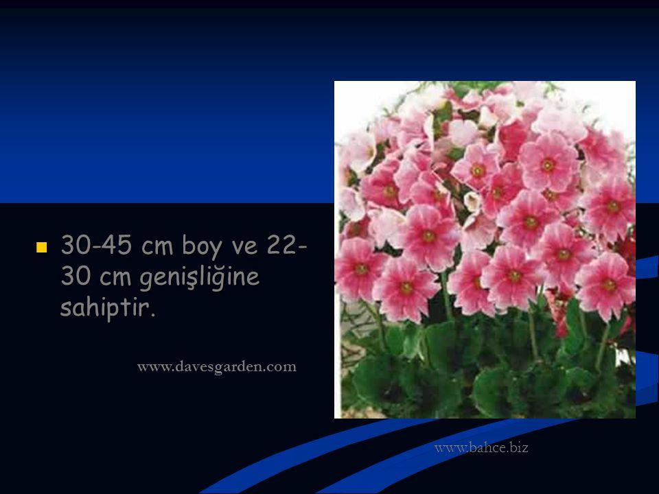30-45 cm boy ve 22-30 cm genişliğine sahiptir.