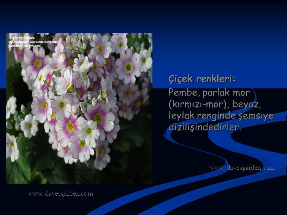 Çiçek renkleri: Pembe, parlak mor (kırmızı-mor), beyaz, leylak renginde şemsiye dizilişindedirler. www. davesgarden.com.