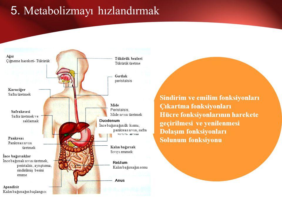 5. Metabolizmayı hızlandırmak