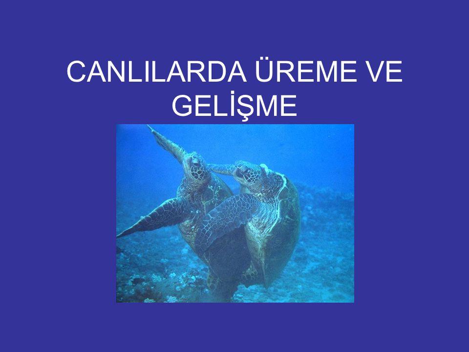 CANLILARDA ÜREME VE GELİŞME