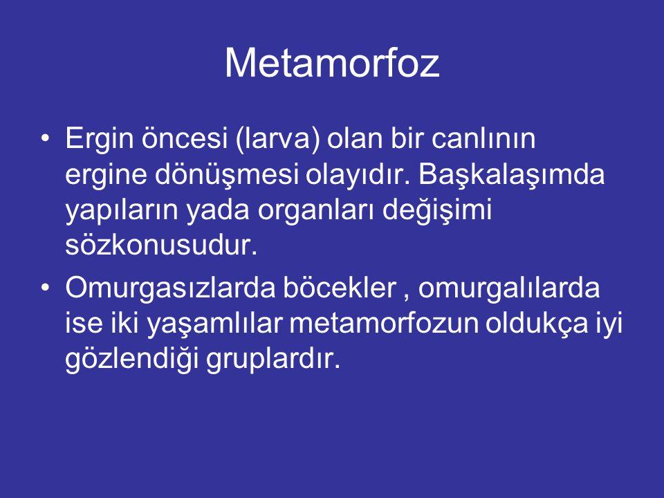 Metamorfoz Ergin öncesi (larva) olan bir canlının ergine dönüşmesi olayıdır. Başkalaşımda yapıların yada organları değişimi sözkonusudur.