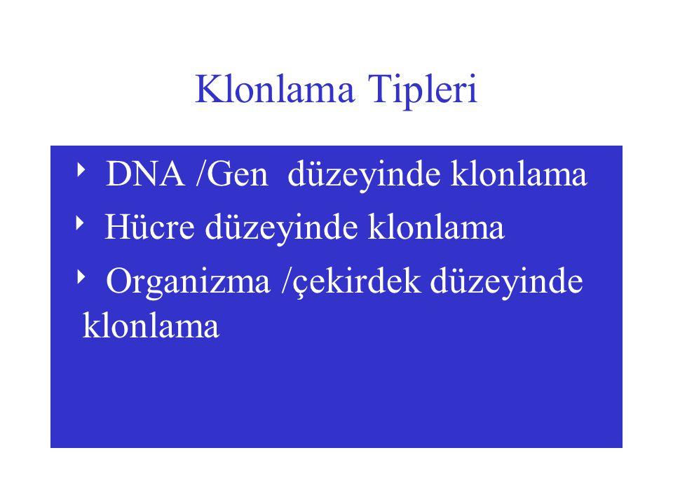 Klonlama Tipleri  DNA /Gen düzeyinde klonlama