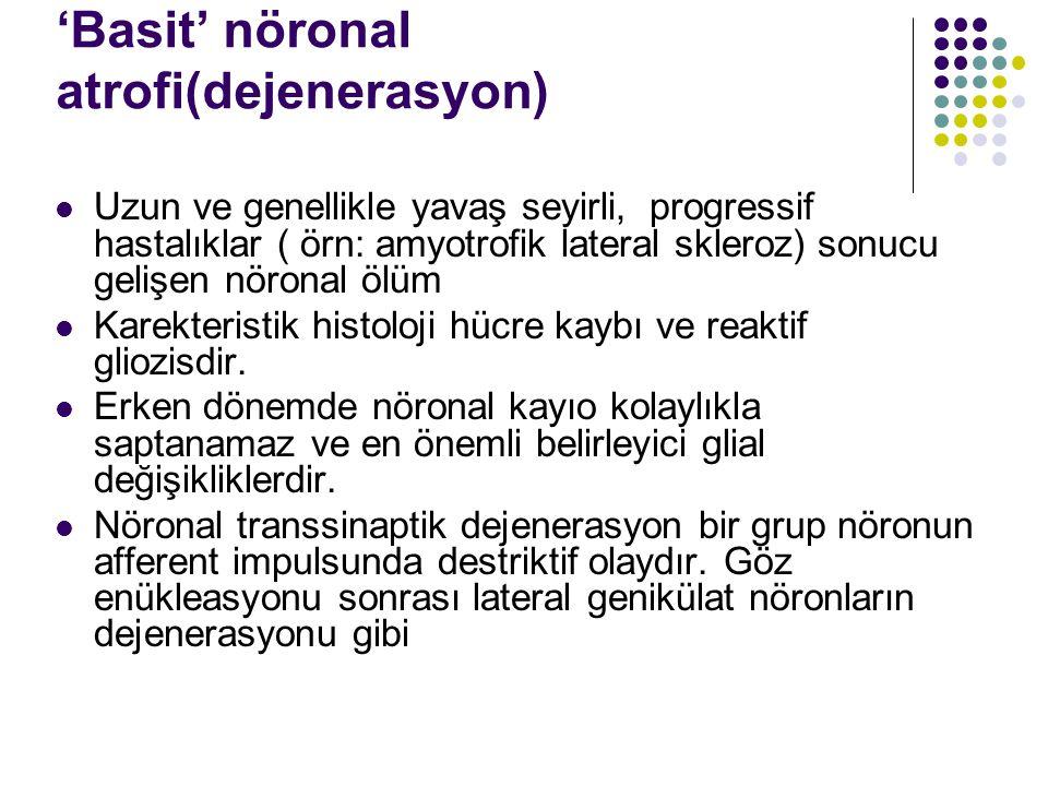 'Basit' nöronal atrofi(dejenerasyon)