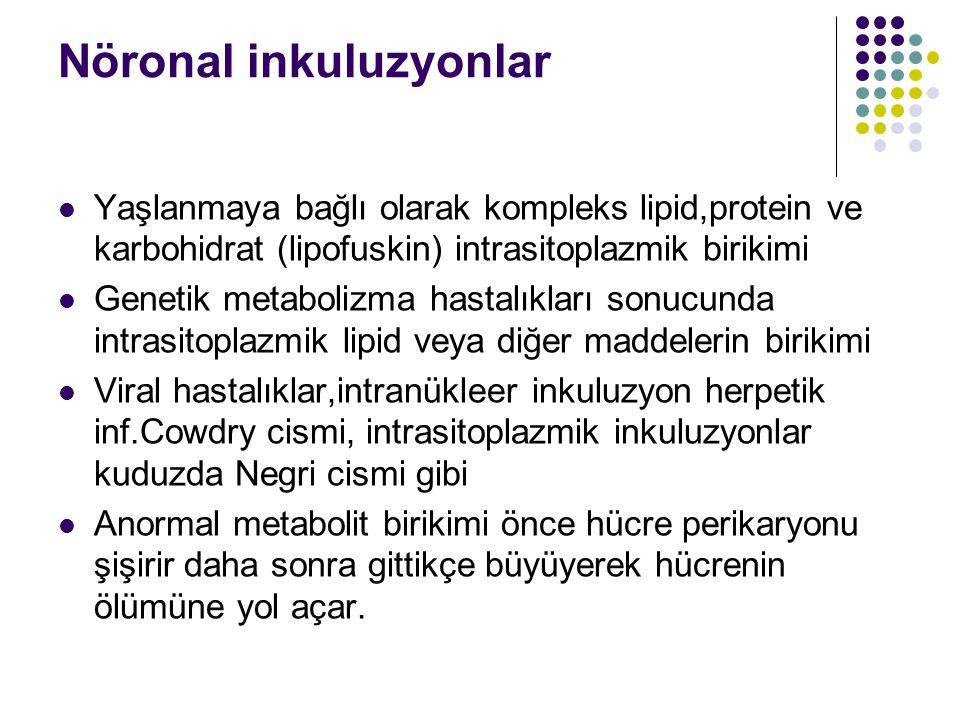 Nöronal inkuluzyonlar