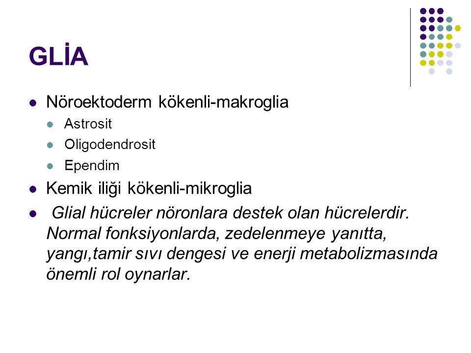 GLİA Nöroektoderm kökenli-makroglia Kemik iliği kökenli-mikroglia