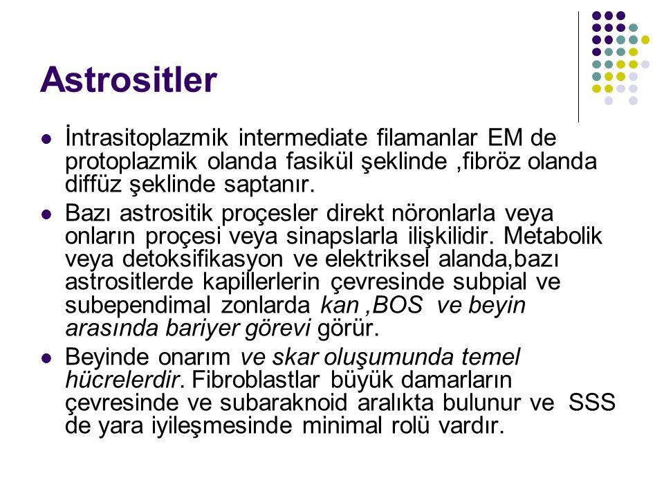 Astrositler İntrasitoplazmik intermediate filamanlar EM de protoplazmik olanda fasikül şeklinde ,fibröz olanda diffüz şeklinde saptanır.