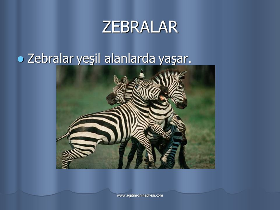 ZEBRALAR Zebralar yeşil alanlarda yaşar. www.egitimcininadresi.com