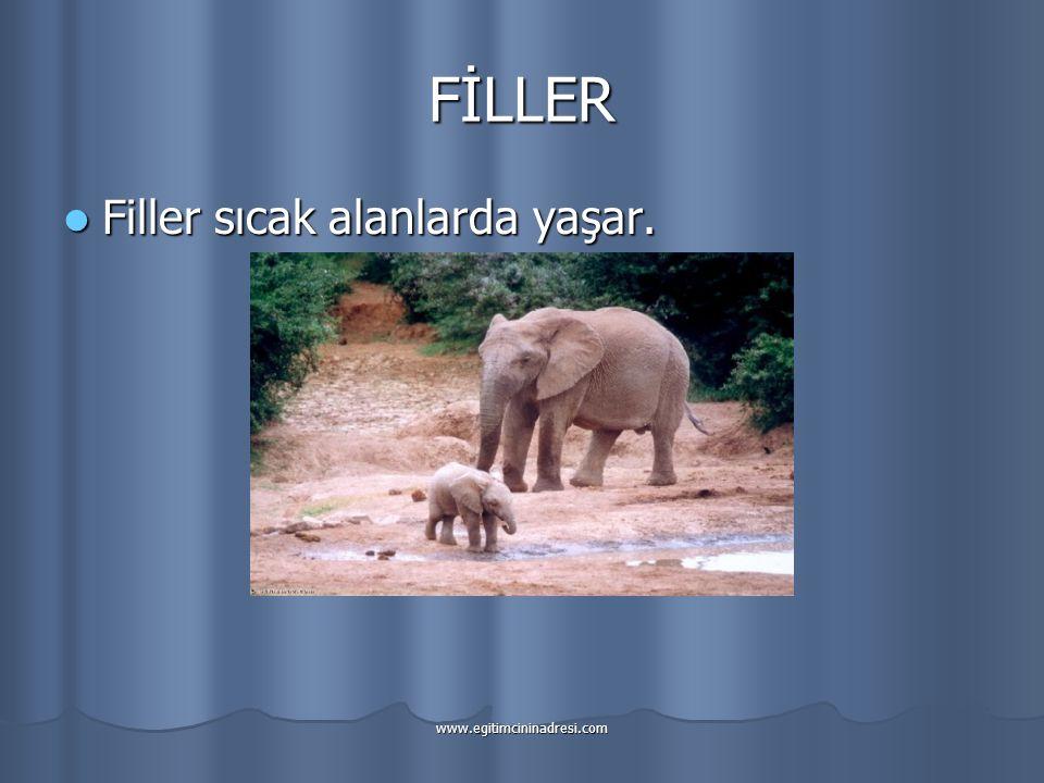 FİLLER Filler sıcak alanlarda yaşar. www.egitimcininadresi.com