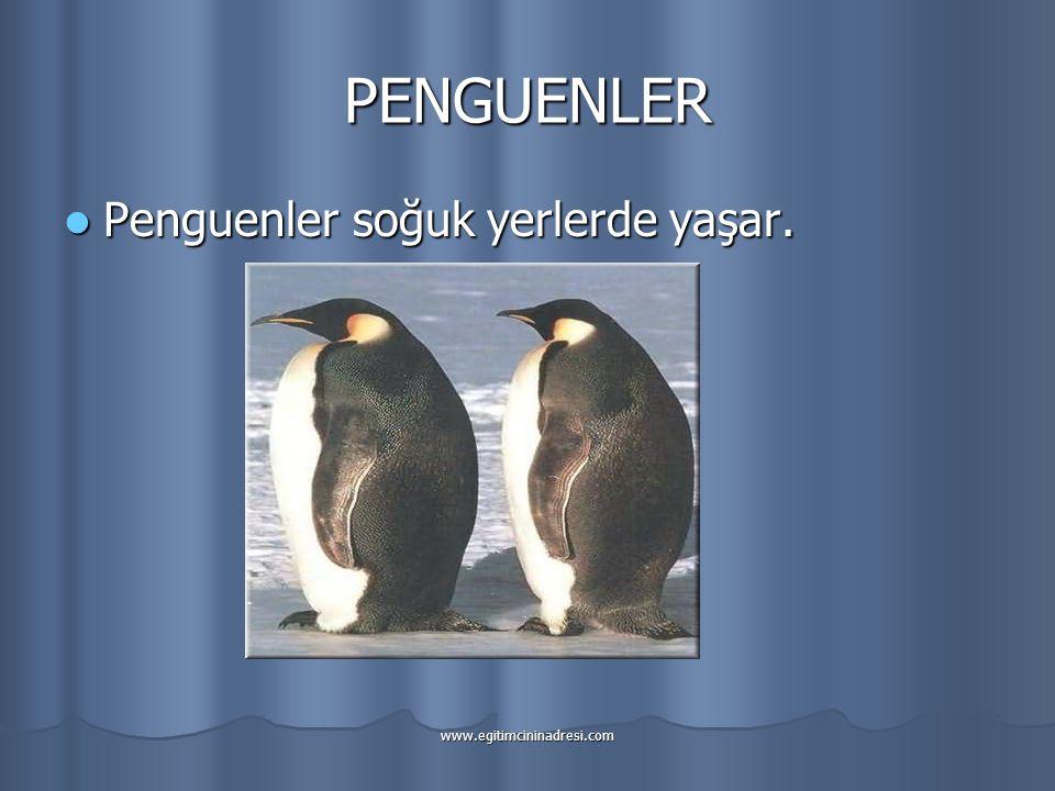 PENGUENLER Penguenler soğuk yerlerde yaşar. www.egitimcininadresi.com