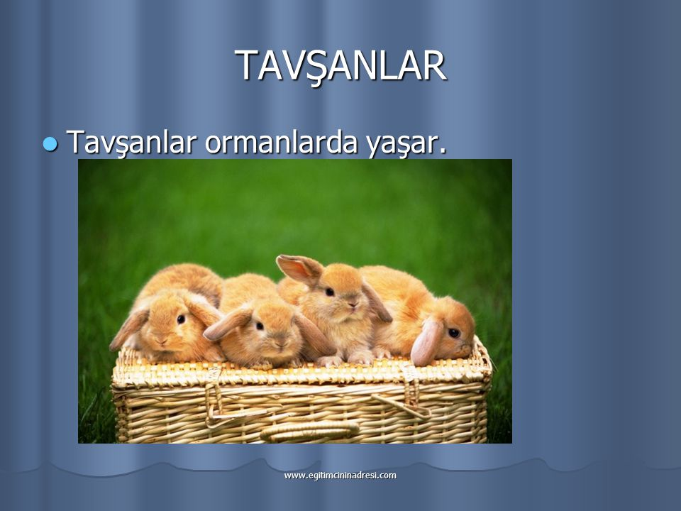 TAVŞANLAR Tavşanlar ormanlarda yaşar. www.egitimcininadresi.com