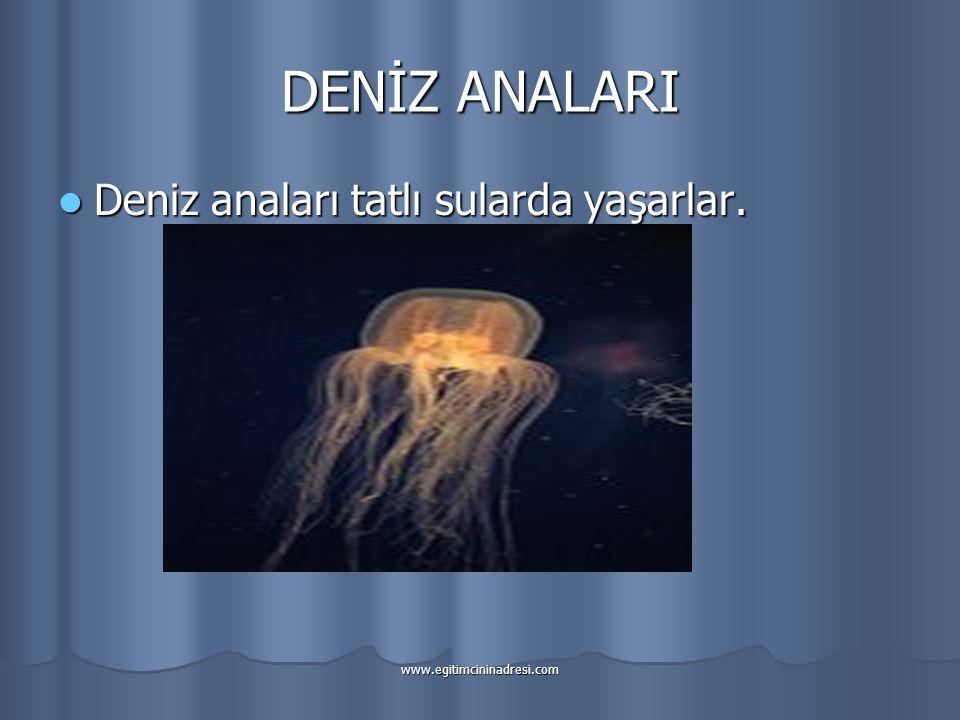 DENİZ ANALARI Deniz anaları tatlı sularda yaşarlar.