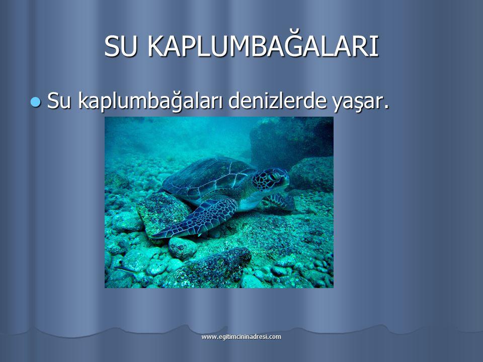 SU KAPLUMBAĞALARI Su kaplumbağaları denizlerde yaşar.