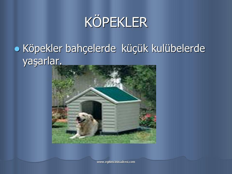 KÖPEKLER Köpekler bahçelerde küçük kulübelerde yaşarlar.