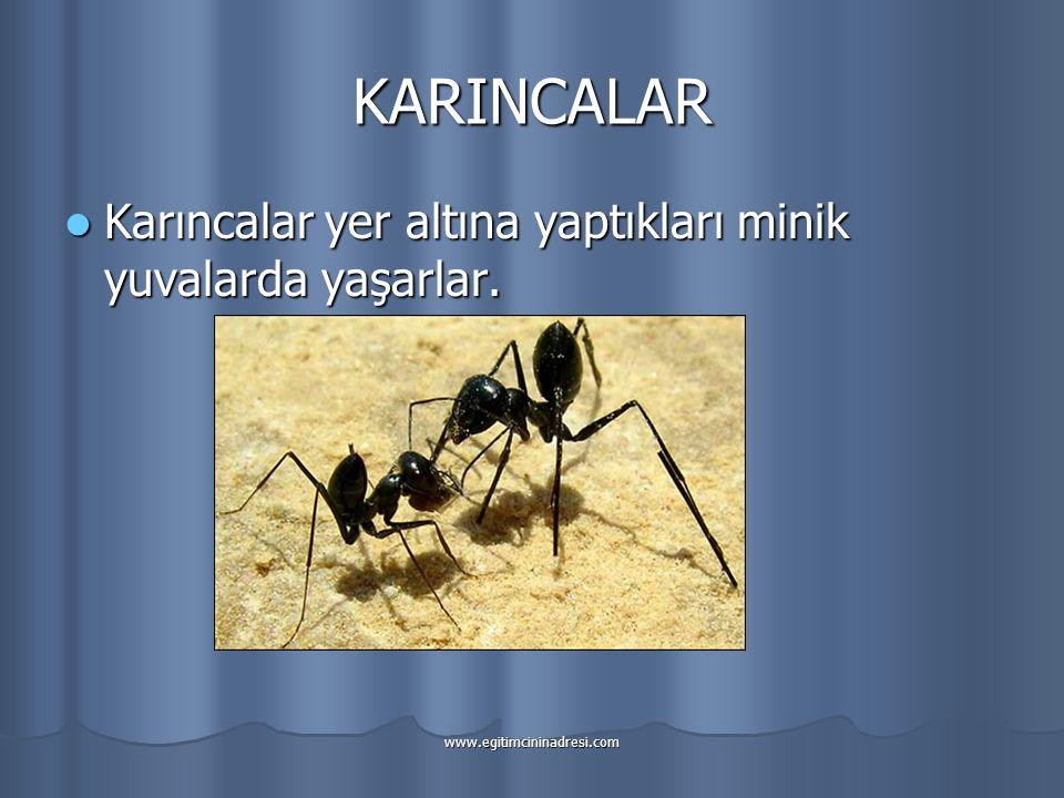 KARINCALAR Karıncalar yer altına yaptıkları minik yuvalarda yaşarlar.