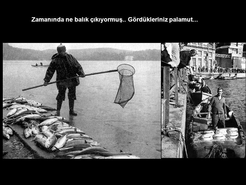 Zamanında ne balık çıkıyormuş.. Gördükleriniz palamut...