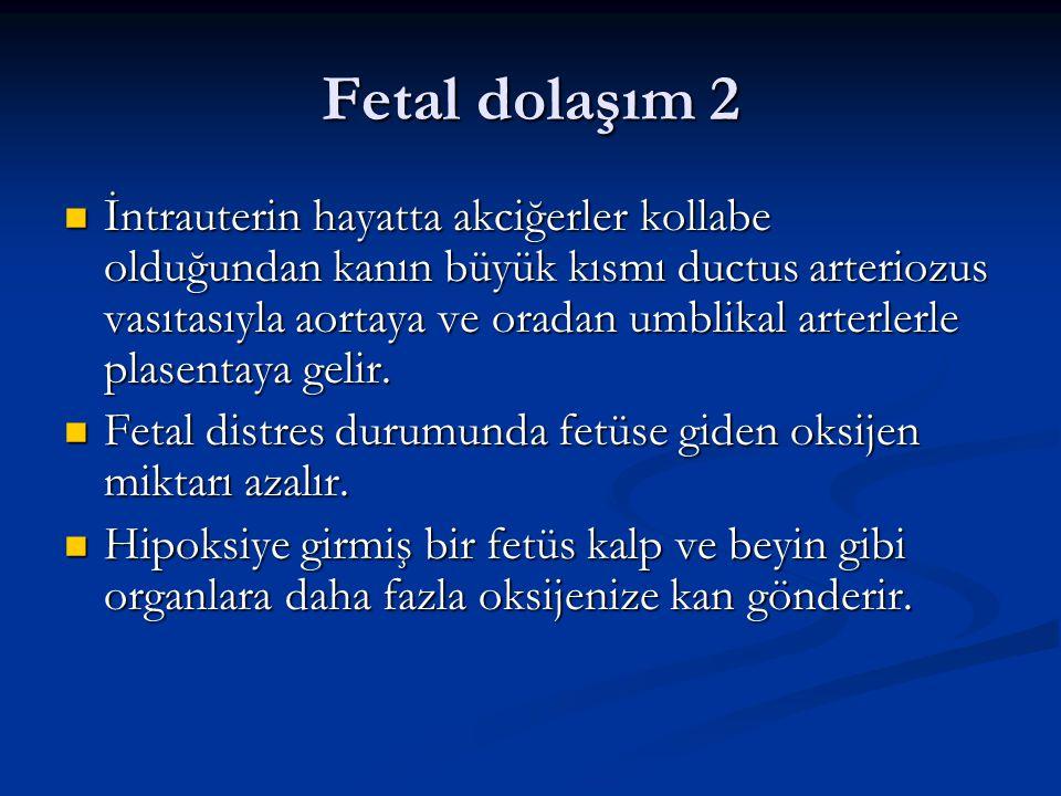 Fetal dolaşım 2