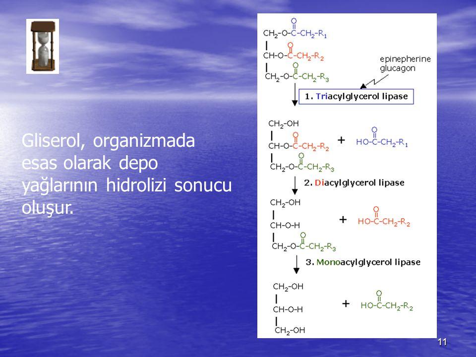 Gliserol, organizmada esas olarak depo yağlarının hidrolizi sonucu oluşur.