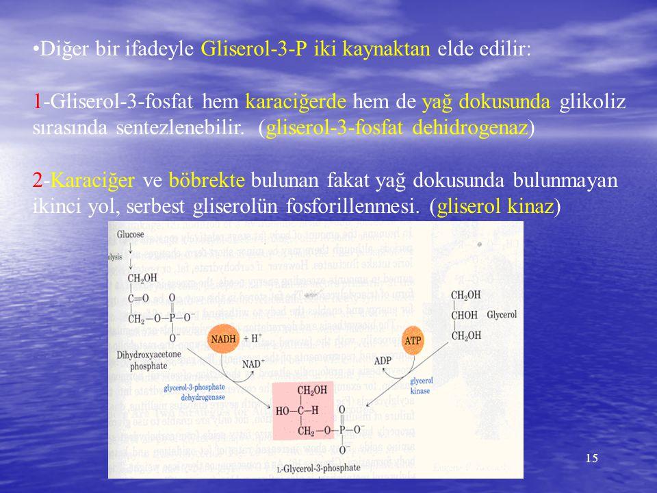 •Diğer bir ifadeyle Gliserol-3-P iki kaynaktan elde edilir: